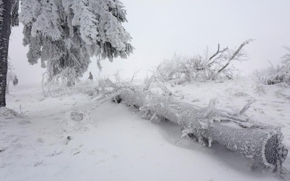 Еще одно сказочное зимнее место на вершине горы Фельдберг в Германии