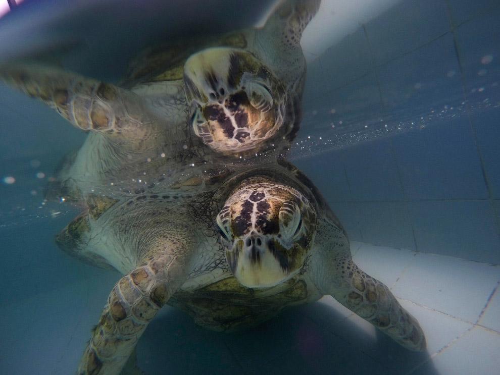Черепаха «Банк»: врачи извлекли из черепахи 915 монет