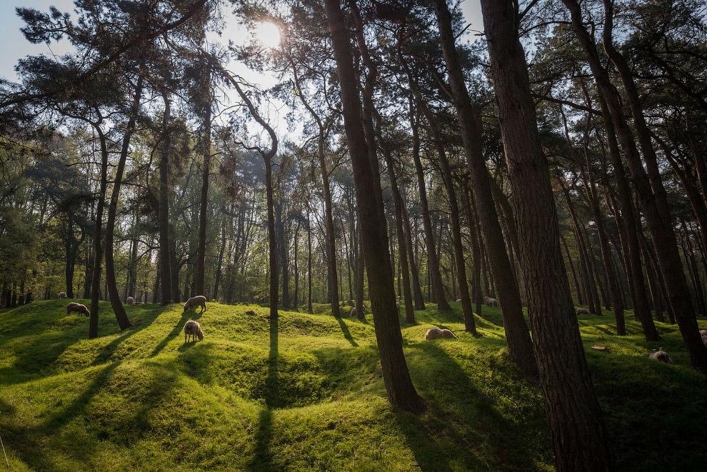 Кратеры в лесу от бомб в Вими-Ридже, Франция