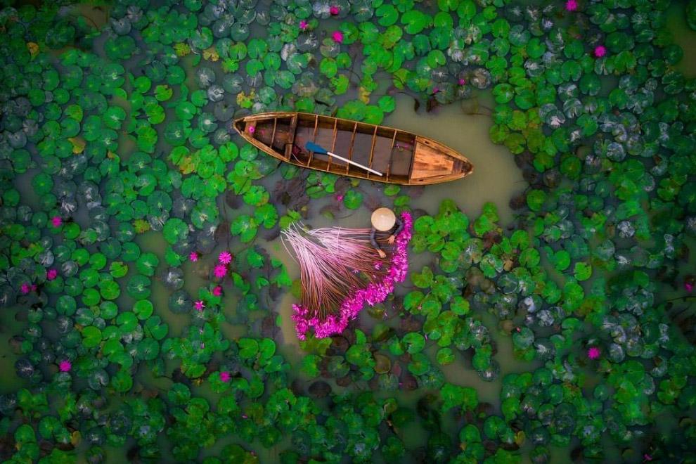 Водные лилии, Вьетнам