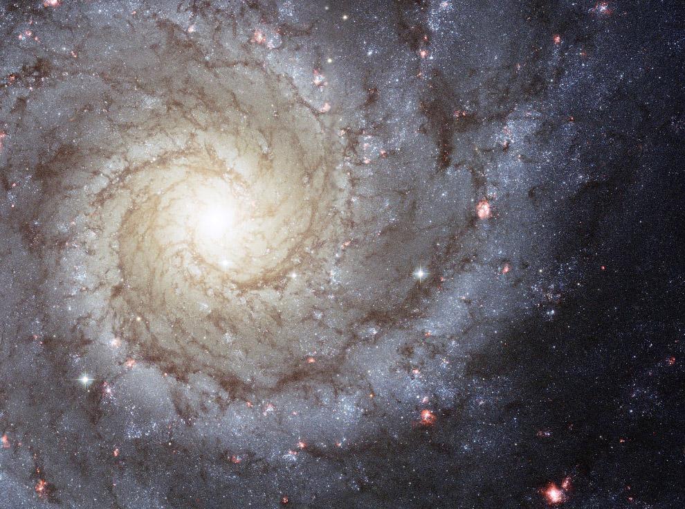 Спиральная галактика M 74