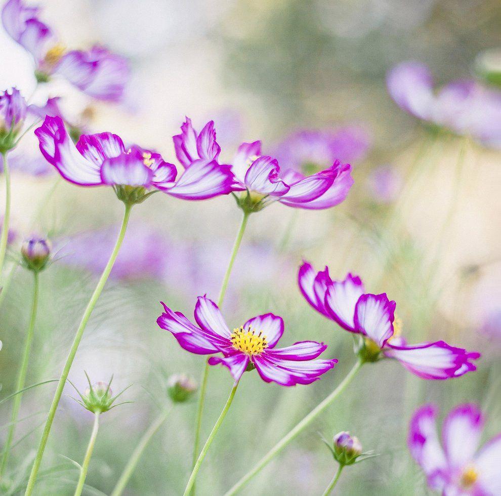 Танцующие цветы, Аверон, Франция