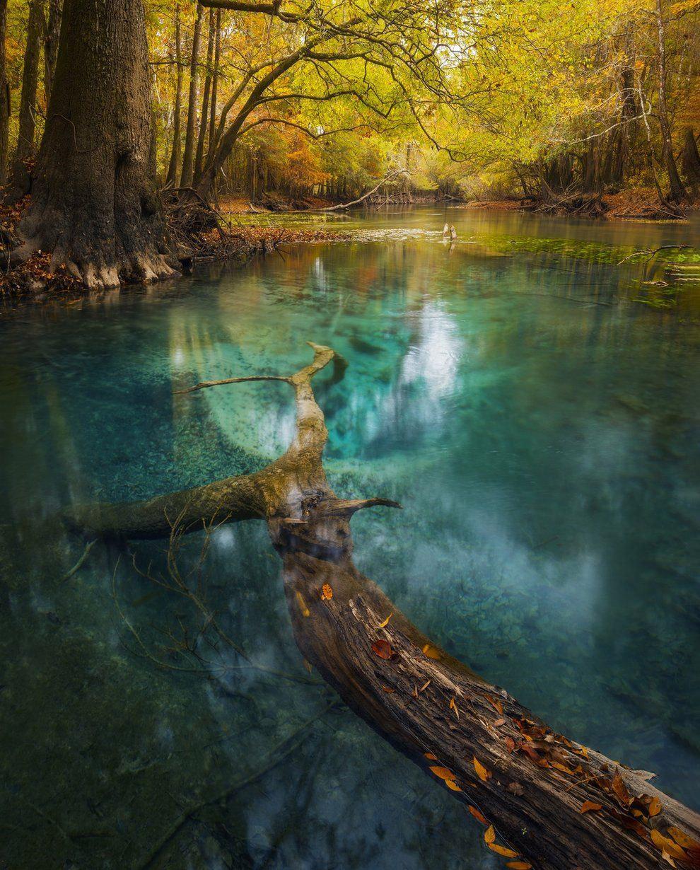 Осенний лес, Флорида, США