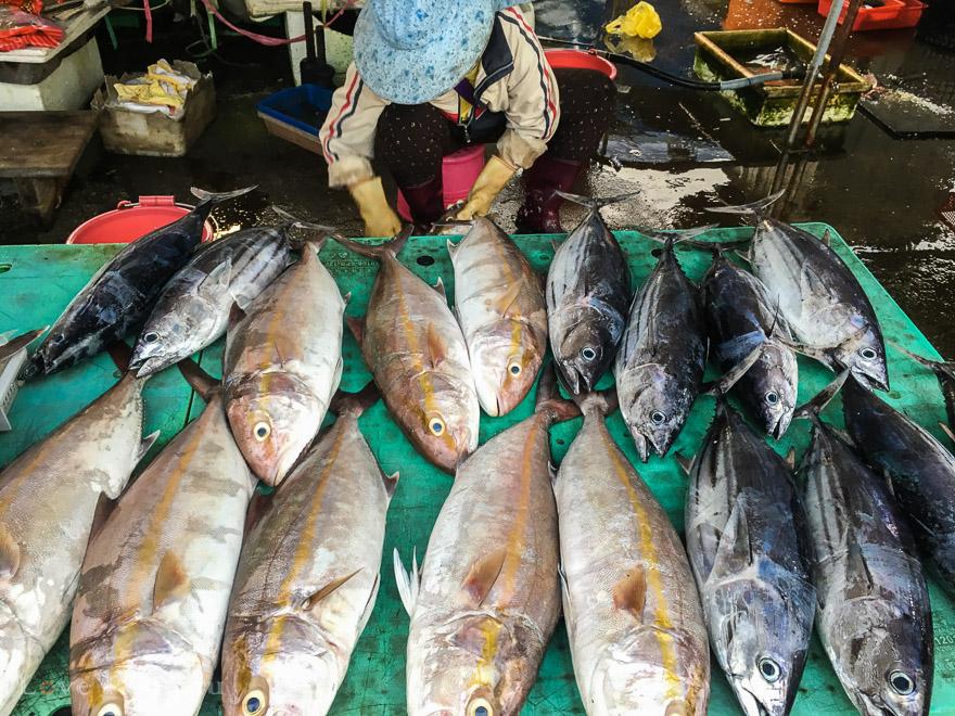 台湾の離島「澎湖(ポンフー)」の魚市場の様子
