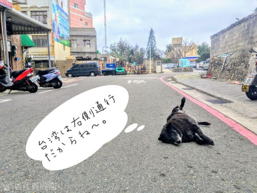 澎湖(ポンフー)の道路に寝転がる犬。微笑ましいけど慣れていないとちょっと危なっかしい。