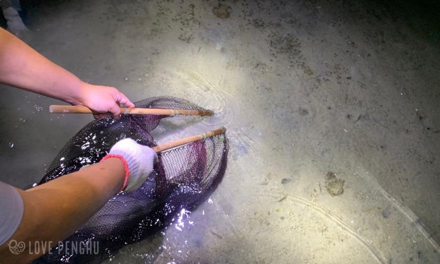 網を使ってエビを捕まえる