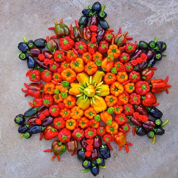 Beautiful capsicum mandala
