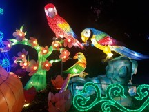 Magical Lantern birds