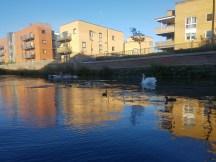 Secret Adventures swan alert