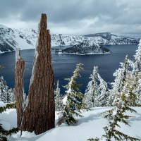 Tree stump, Crater Lake, OR