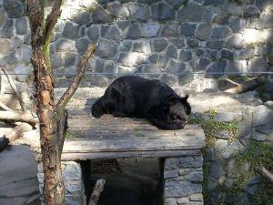 Konopiste Beer Pit bear