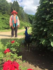 Konopiste peacock jpl 4