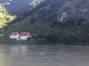 Vineyards along the Danbue
