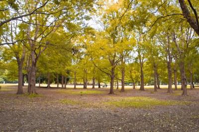 野川公園の風景