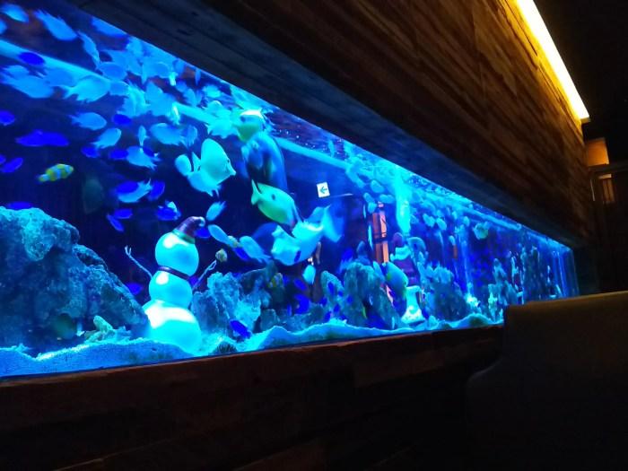 新宿ライム 水槽に泳ぐ熱帯魚