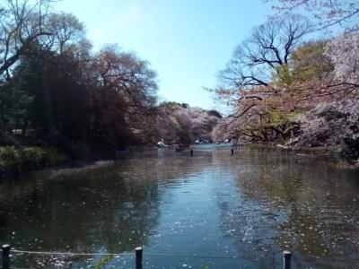 井の頭恩賜公園 桜と池