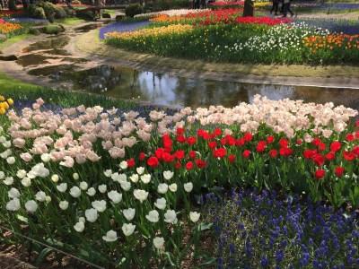 国営昭和記念公園の花
