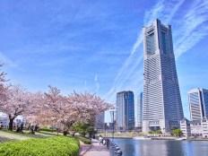 春の横浜の風景