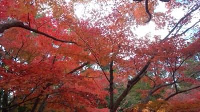 行船公園の紅葉