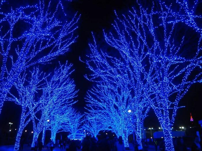 代々木公園 イルミネーション 青の洞窟