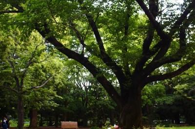 夏の代々木公園 美しい新緑