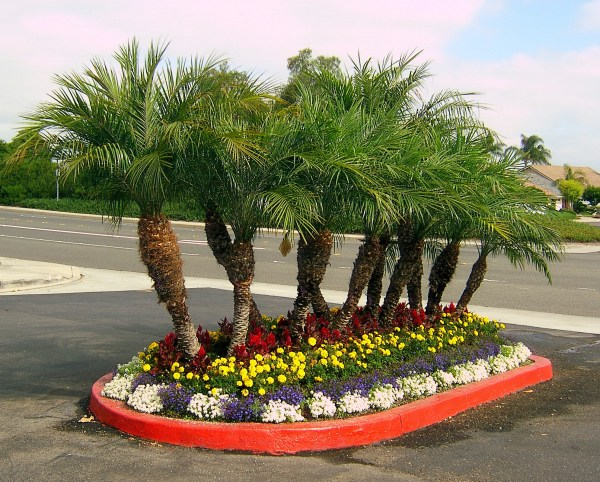 palm tree floral landscaping