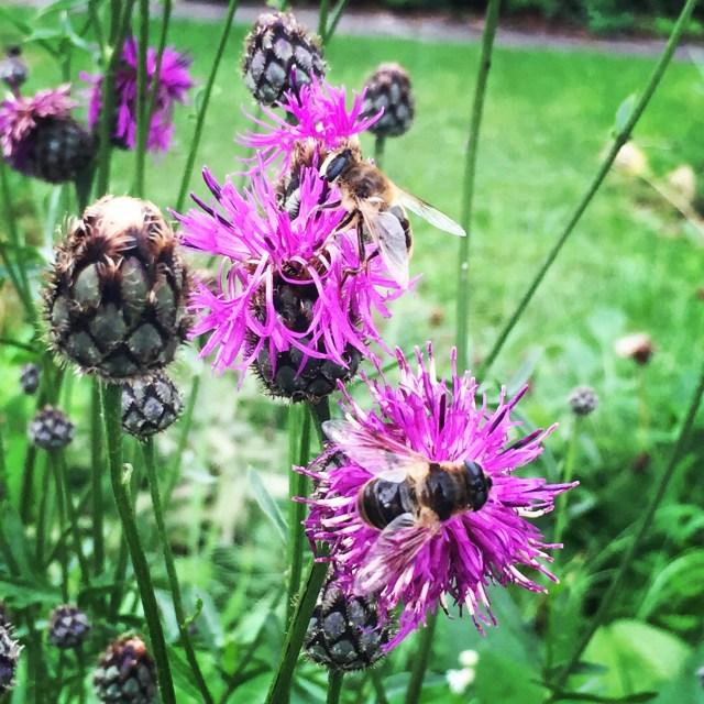 Wanneer moet ik over de bloemetjes en de bijtjes beginnen? Voorlopig nog maar even niet gok ik maar!