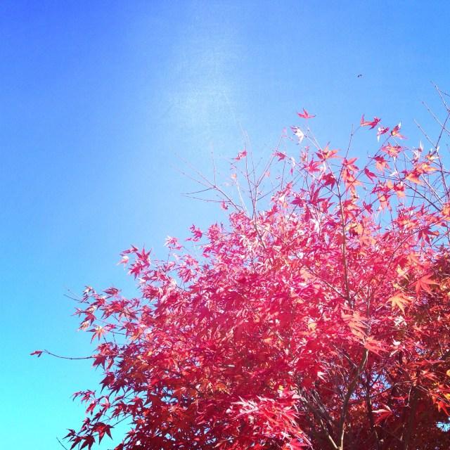 Op maandag is het wederom fantastisch weer, maar langzaam komen de herfstkleuren aan de bomen.