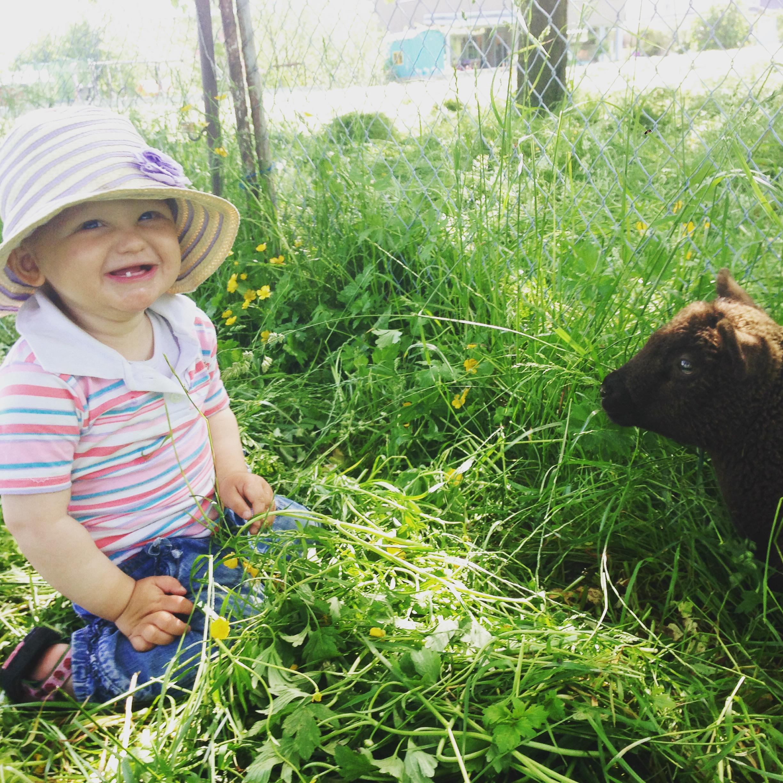 Maandagochtend liep ik met Liza naar de jonge schapen en ze mocht gelijk het weiland in. Kind was zo gelukkig!