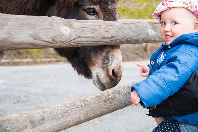 Even een ezel aaien, uiteindelijk vond ze dat nog best spannend. Ze waren wel heel leuk.