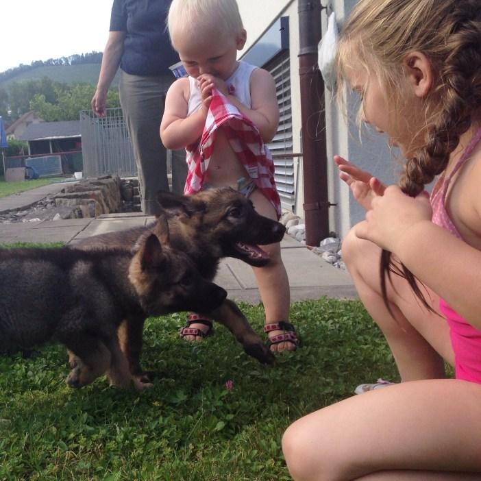 Daarna wilden de kinderen nog met de hondjes van de buren spelen. Er zijn er nog maar 3 over. Lekker rustig!