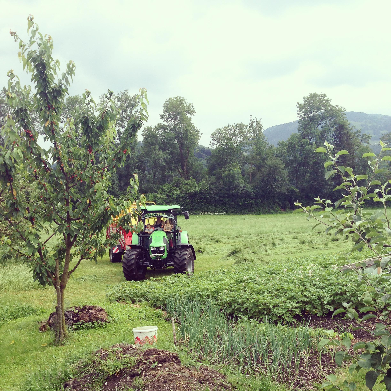 Dinsdagmiddag wordt het veld gemaaid en zijn alle buurkinderen op de tractor te vinden.