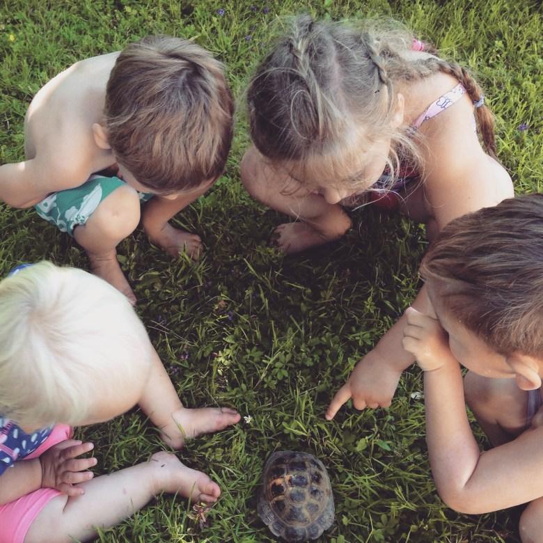 En weer zorgt de schildpad voor veel plezier!
