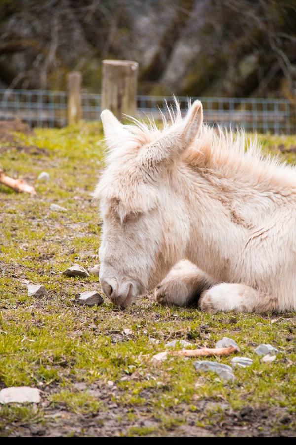 Ook wel mooie ezels, zo wit