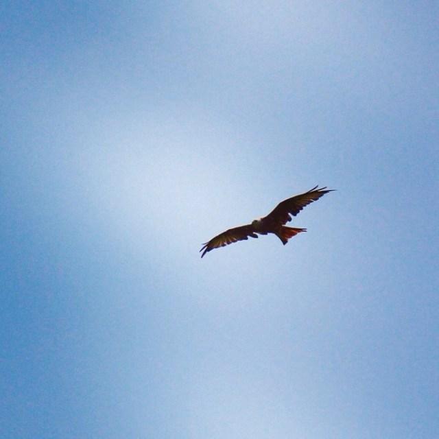 Ondertussen zagen we boven ons hoofd diverse roofvogels vliegen. Gaaf! Dit is schijnbaar een Rode Wauw.