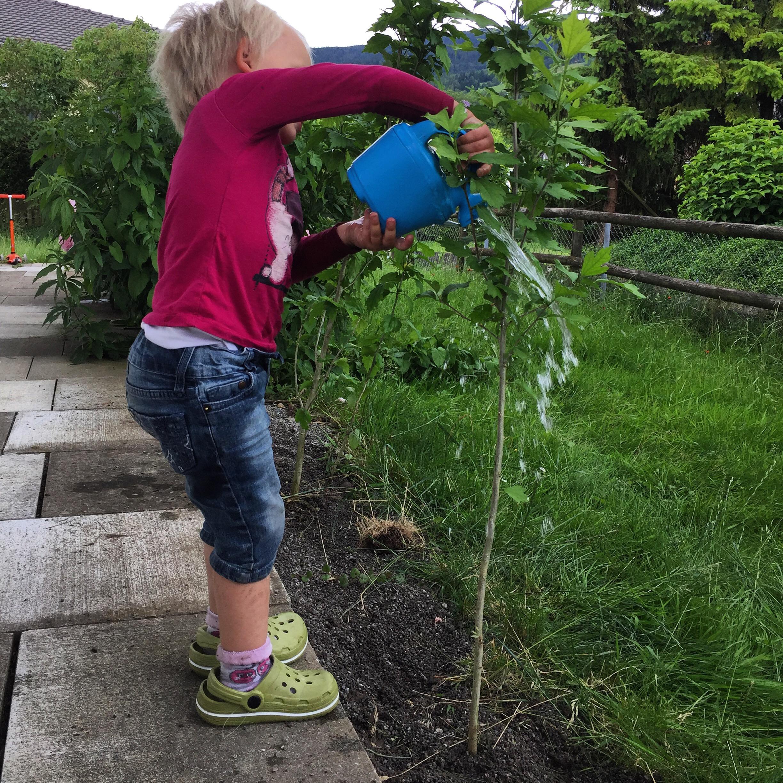 's Middags werk ik lekker in de tuin, het blijft de hele middag droog. Ik verplant twee hibiscussen en Liza geeft ze water