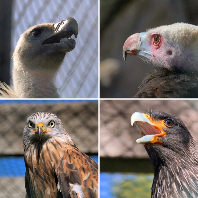 Wat vogeltjes