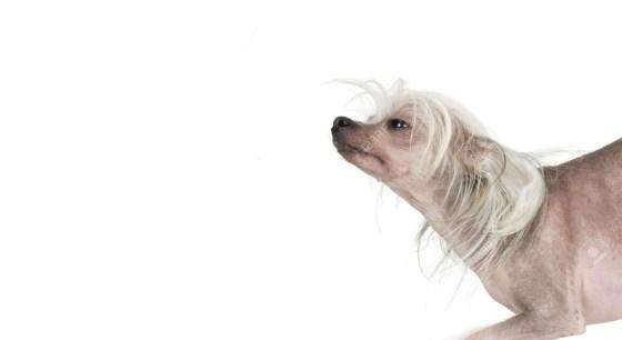 naakthond