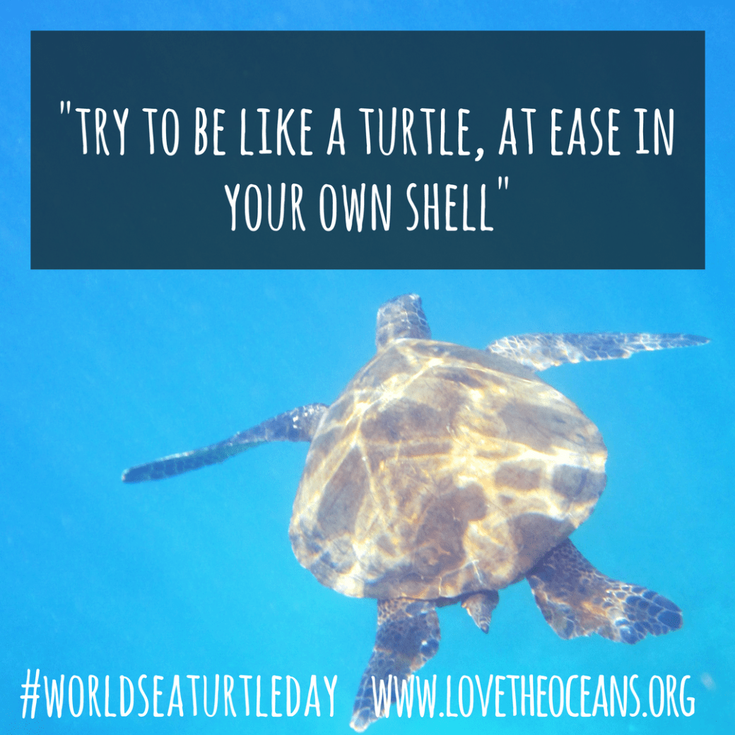 try to be like a turtle, at ease in your own shell