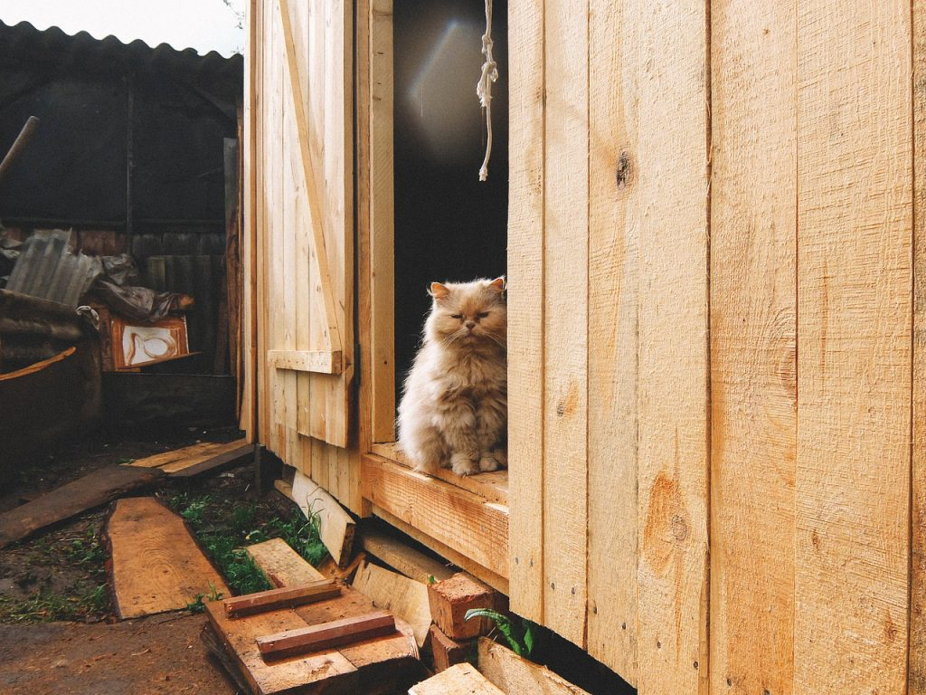 A fluffy orange cat sitting in the doorway of a barn