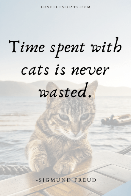 """""""Time spent with cats is never wasted."""" -Sigmund Freud"""