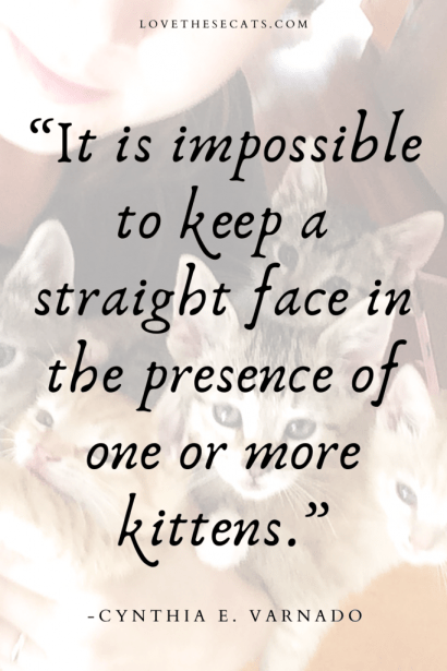 """A quote about cats that says """"It is impossible to keep a straight face in the presence of one or more kittens."""" -Cynthia E. Varnado"""