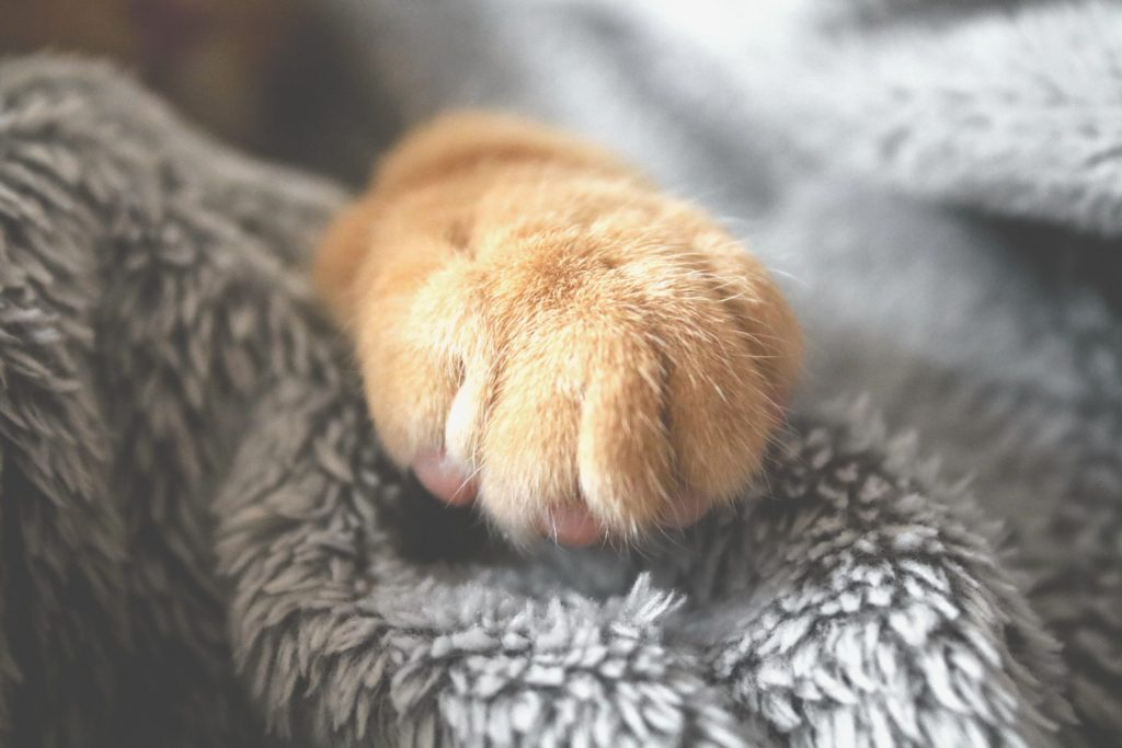 A close-up of a cat's paw