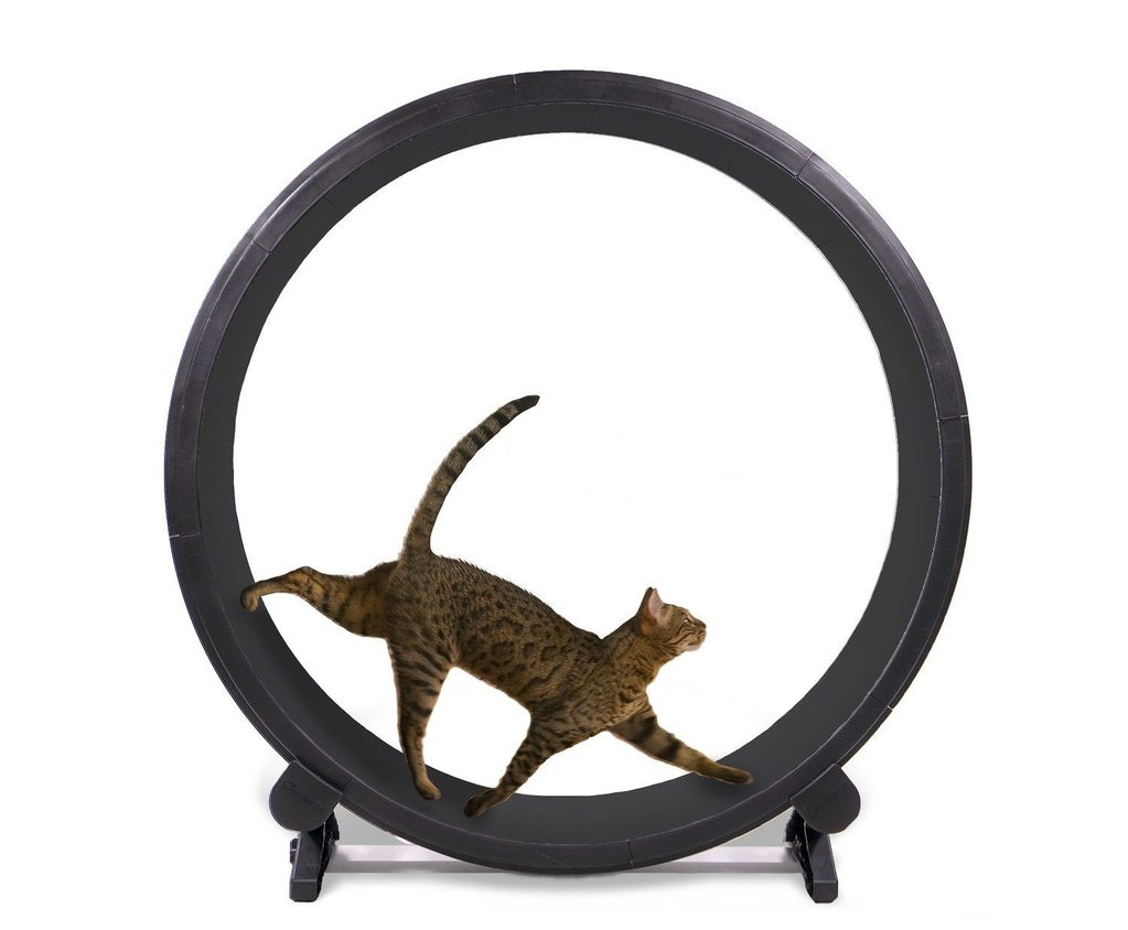 A cat exercise wheel that could
