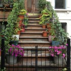 Brownstone stoop lined with potted plants and ivy - stairway to heaven.