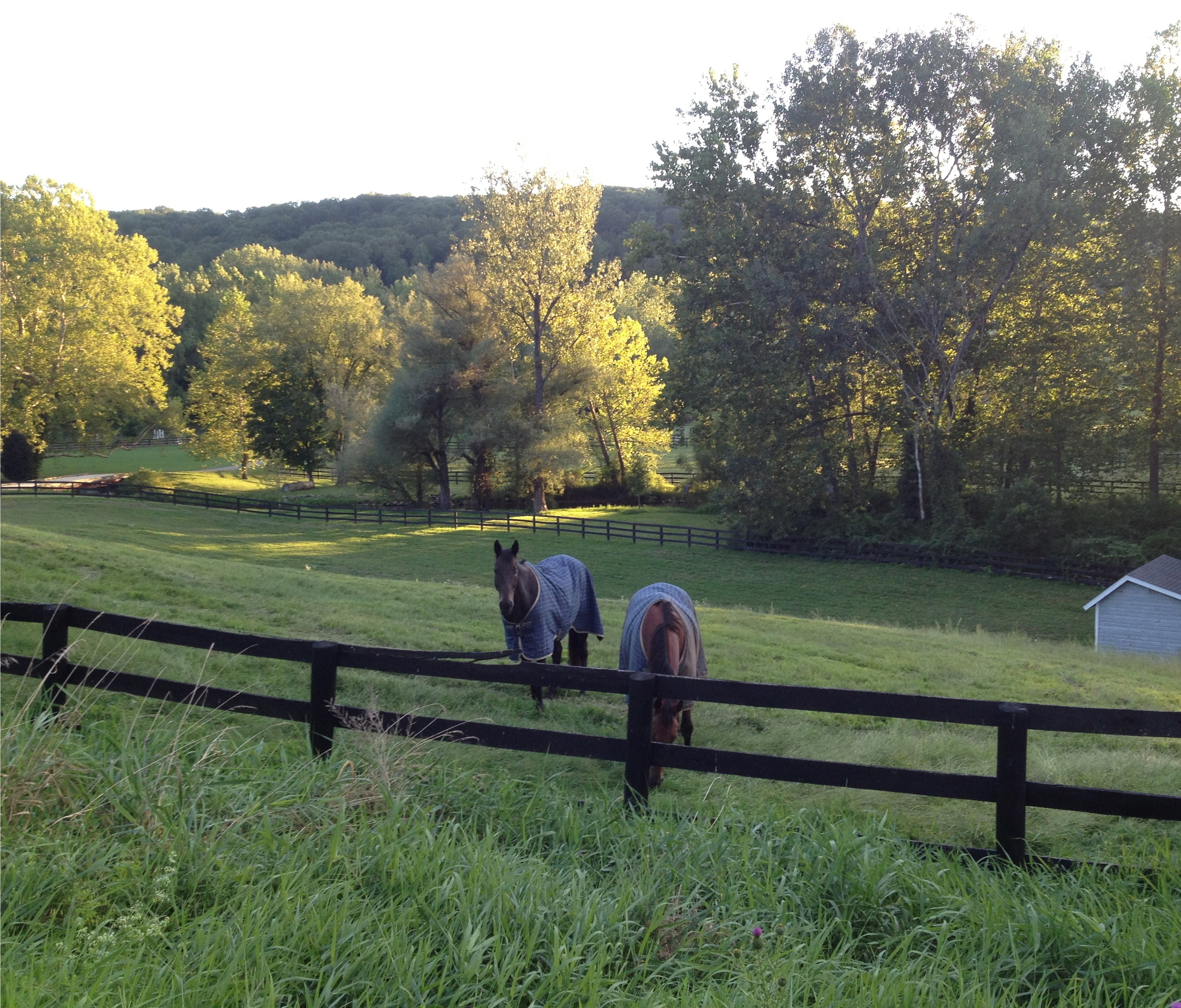 Horses in upstate New York.