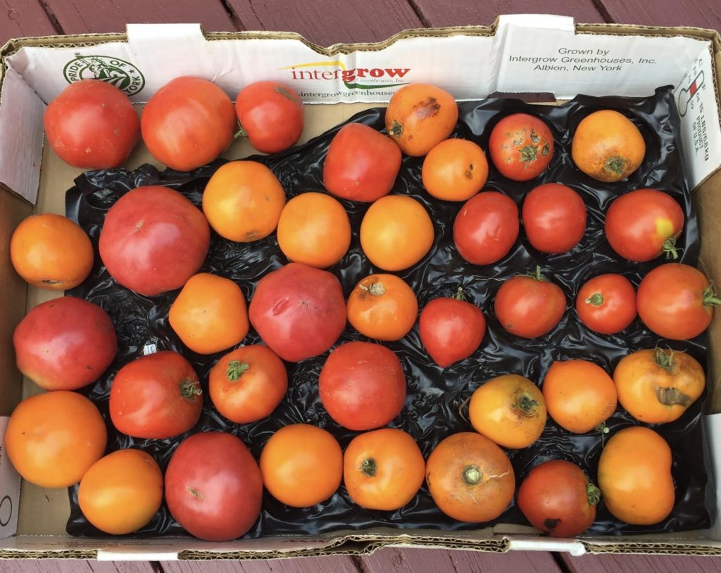 Eleven pounds of fresh tomatoes in a box.