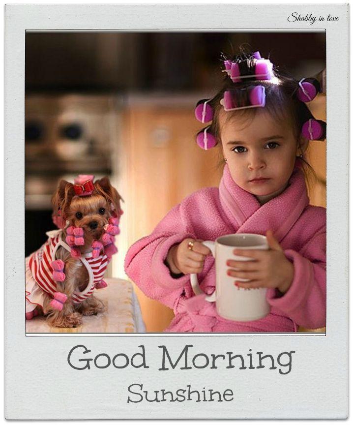 Good Morning Sunshine Funny : morning, sunshine, funny, Morning, Sunshine, Quote, Pictures,, Photos,, Images, Facebook,, Tumblr,, Pinterest,, Twitter