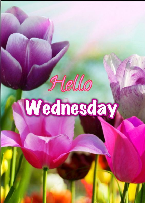 Hello Wednesday Images : hello, wednesday, images, Hello, Wednesday, Pictures,, Photos,, Images, Facebook,, Tumblr,, Pinterest,, Twitter