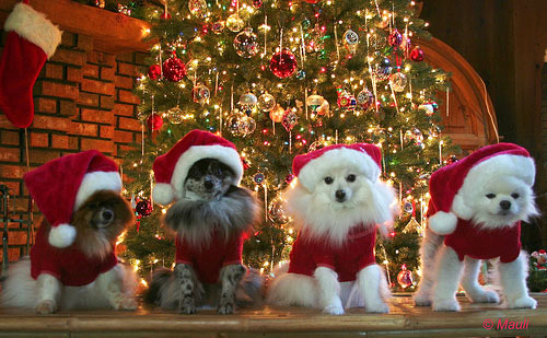 Christmas Animals Pictures, Photos, And Images For